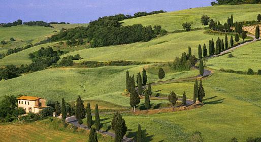 Tuscanycypresses