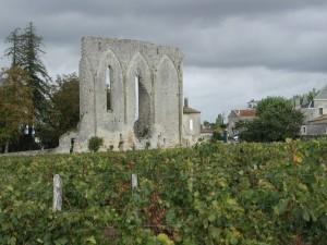 Saint-Emilion Vines