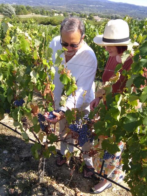 08181503 step into vineyard